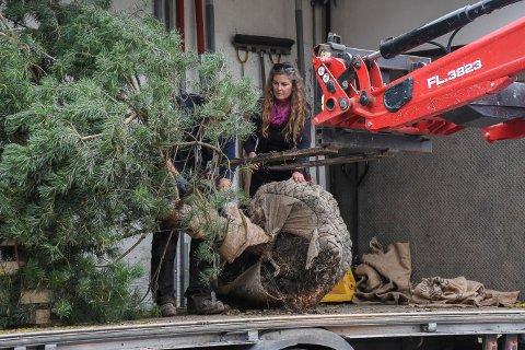 Liv Fjellsol forteller at med furutreet er det nå 36 busker og trær på eiendommen til Galleri Fjellsol..