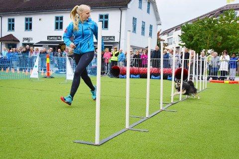 Avlyses: Agilityshowet som de siste årene er blitt arrangert på torget i Brumunddal skulle i år arrangeres i Moelv. Det er nå avlyst på grunn av hundesykdommen som har rammet Østlandet.