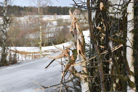 HØSBJØRVEGEN: Slik så det ut langs Høsbjørvegen i Furnes mandag. En beboer i området reagerer på måten kantklippingen har blitt gjort.