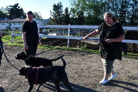 Tryggere: Trine Torp Didriksen (t.v) legger til rette for at hunder skal kunne møtes en gang i uka. Miljøtrening skal gi hundene trening i å forholde seg til hverandre.
