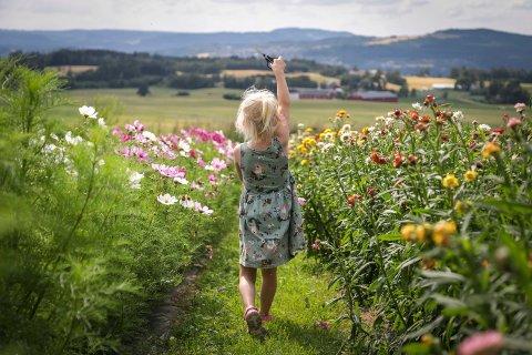 TAR MED SOMMEREN INN: Ella Heitmann-Hegge (4) har lånt saks fra blomsterbua og er klar til å plukke med seg en bukett hjem.