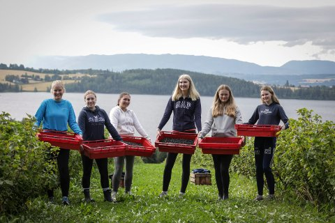 Bærplukk: Russegruppa plukket fredag solbær på Mølstad. Fra venstre: Mia Storli Sjørengen, Hedda Onsum, Amelia Lawinska, Dina Cicilie Lishagen, June Westby, Ane Sofie Korsveien Allergodt.