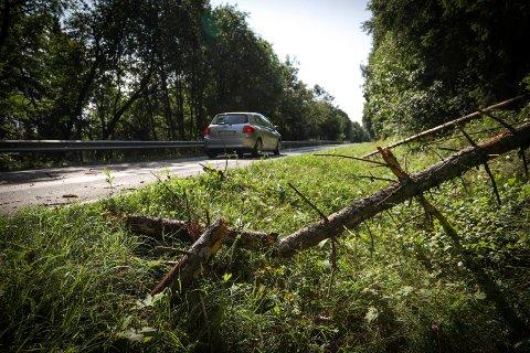 Farlig: Her har bilisten kastet unna stubbene som lå midt i vegen.