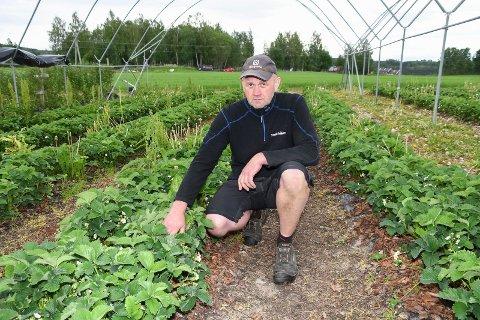 Kan komme til å gi seg: Rune Hagelund kan ha gjennomført sin siste jordbærsesong.
