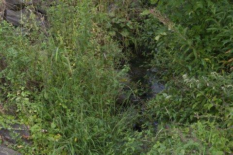 Bekkeleiene mangler vann og er fulle av kratt og gressvekst.