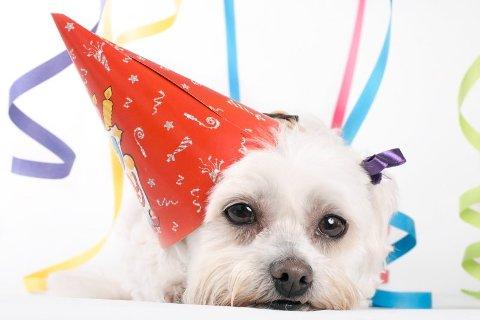 Nyttårsaften betyr fest for folk flest - men ikke for kjæledyrene våre.