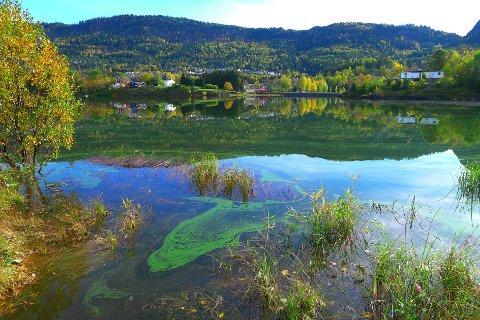 GRØNN FJORD: Kanskje noen av våre lesere vet hva det grønne i Steinsfjorden er?