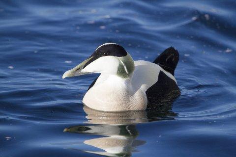– Kunnskap om skadelige aktiviteter, spesielt viktige områder, sårbare arter og perioder må tas i bruk, sier Martin Eggen i Norsk ornitologisk forening.