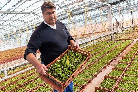 ALVORLIG: Gjermund Kristoffersen på Elstøen gartneri ser alvorlig på korona-situasjonen, men er glad for at de har greid å holde produksjonen inne i gang så langt.
