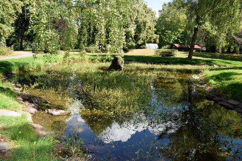SALAMANDERE I FARE: Det er faretruende lite vann i dammen i Søndre park.