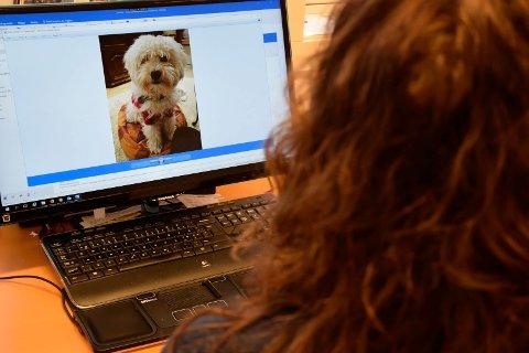 TRAGISKE HENDELSER: En kvinnes hund ble avlivet etter at den ble bitt flere ganger av en stor hund. – Hold hunden i bånd, oppfordrer Karl A. i dagens Direkte linje.