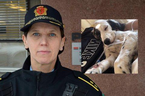 FANT IKKE NARKOTIKA: Politioverbetjent Inger Væråmoen opplyser at de har søkt med hunder der eierne mener valpen Litchi ble forgiftet.