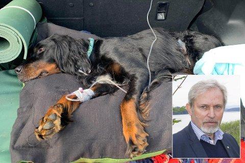 BESTEVENNER: Per Bergers hund Happy (7) ble akutt syk på jakttur, og døde i dag hos dyrlegen etter en operasjon.