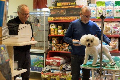 UTVIDER: Hønefoss Akvarium utvider butikken. Ove Olsen (68) og papegøyen Jacob (35)  følger nøye med på at Tom Olsen (64) gir Tim (1) en ny frisyre. – Hallo sier, Jacob.