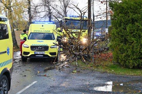 RÅTTENT: Flere naboer mente at treet som falt over en bil mandag var råttent.