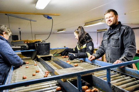 POTETPAKKING: Bernt Gran ved båndet hvor potetene sorteres av Anna Christner (i midten) og Irena Pociene.