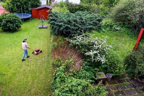 AVLIVE: – Finner du en flekkbåndsnegle oppfordres du til å sende inn bilder av sneglen til Planteklinikken hos Norsk institutt for bioøkonomi (NIBIO) med stedsangivelse og størrelse, og deretter avlive den med en så rask og skånsom metode som mulig, opplyser Mattilsynet.