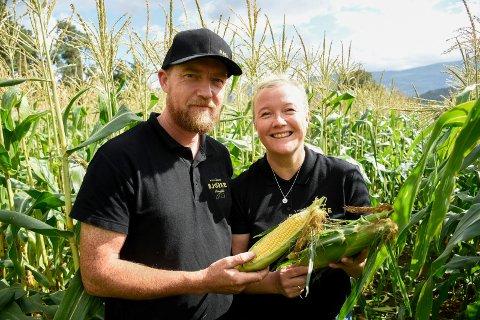 MAISBØNDER: Hans Bjella Bjørke og Lisa Hoen satser for fullt på mais på Bjørke gård i Hole. I høst har besøket tatt fullstendig av.