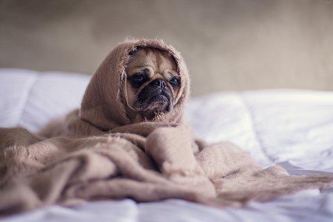 SENSITIVE SKAPNINGER: Hunder kan være sarte skapninger. I hvert fall overfor skarpe og ukjente lyder som fyrverkeri. Leserne er delt i synet på hva som er best for hunden.