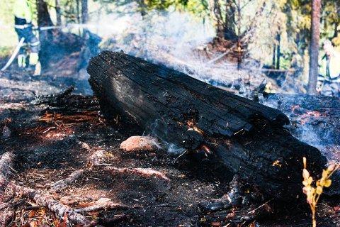 BÅLPLASS: Her brant det i skogen torsdag.