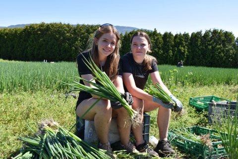 SOMMERJOBB: Marlene Tronrud og Ingrid Tanem har sommerjobb i landbruket.