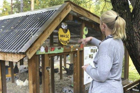 Hønsehus: Natt til onsdag har noen tatt seg inn i barnehagen brutt opp låser og sluppet hønene ut. - Vi håper saken kan bli oppklart, sier Birgit Eggerud , fungerende bestyrer i Vesletun barnehage.                 (alle foto Asbjørn S. Torgersen)