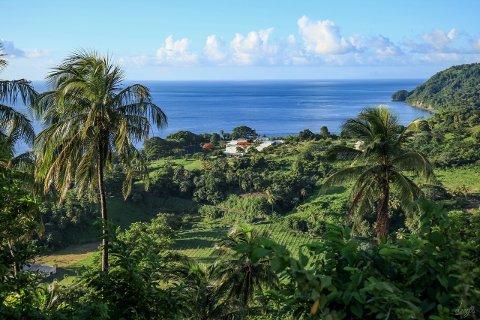 STINAS ØYPARADIS: Det ser ut som et paradis, Richmond Vale Academy på øya St. vincent i den fattige øystaten St. vincent & Grenadinene, der rjukanjenta Stina Herberg driver skole for bærekraft.