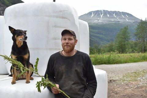 FØRSTESLÅTTEN: Jørgen Kårvand foran noen av rundballene fra årets førsteslått. Han viser også fram et eksemplar av den beryktede Høymola, som det kryr av i sommer.