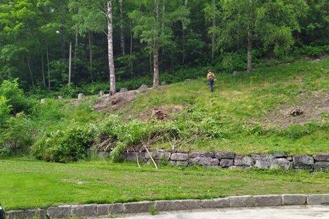 RYDDING: Rjukan Veforening gjennomfører rundt fire dugnader i året. Her fra en ryddedugnad rundt Rjukan kirke i juni 2020.