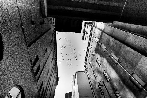 LINJER: Jeg ser ofte etter linjer når jeg fotograferer.  Det gjør jeg blant annet for å få en balanse i bildene mine. I tillegg er det viktig å holde kameraet parat når motivet (i dette tilfellet fuglene) dukker opp.