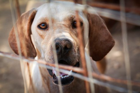 Redder hunder i Hellas. kefalonia.