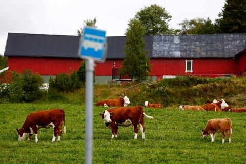 Bondeorganisasjonene krever et realt løft for landbruket i år, særlig for små og mellomstore bruk.