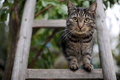 Katter klarer seg ikke selv i naturen, og de formerer seg kraftig om de ikke holdes under kontroll. Foto: Frank May / NTB scanpix