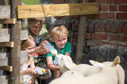 På tunet kan du hilse på lam og høner denne dagen.