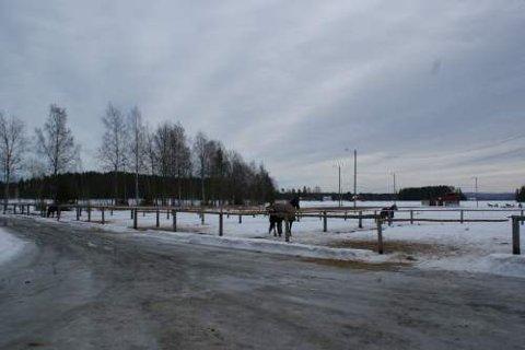 STENGT: Stallen på Kulmoen i Nes er stengt pga salmonellafare. Banen og treningsanlegget er åpent som vanlig.