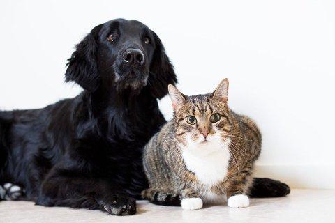 UIMOTSTÅELIGE: Det kan være vanskelig å stå imot hundens eller kattens bedende blikk. Foto: Pressebilde/ANB