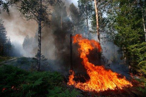 FRYKTER SKOGBRANN: NRBR frykter skogbrann og innfører igjen totalforbud mot bruk av alle typer ild. Illustrasjonsfoto: NTB scanpix