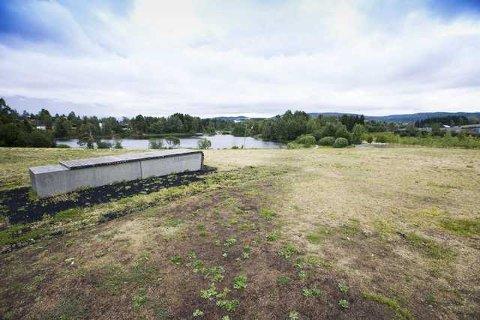 GUL: Plenen i Rådhusparken i Lørenskog var gul i juli. Botaniker Kristina Bjureke mener det ikke er noe å bekymre seg for.