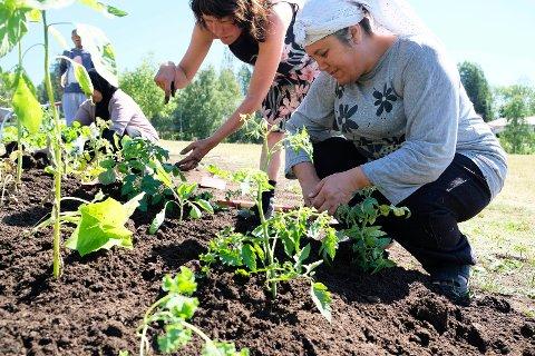 Lørenskog voksenopplæring får også stort utbytte av prosjektet.