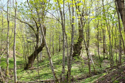 VIKTIG RAVINE: Romerike har fått tre nye naturreservater. Et område i det viktige ravinelandskapet på Asak ved Leirsund er nå vernet. Her fra Asak mellem.