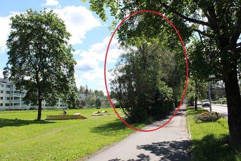 OMSTRIDT VEGETASJON: Deler av vegetasjonen mellom veien og parken skal fjernes for å åpne opp området, har politikerne bestemt.
