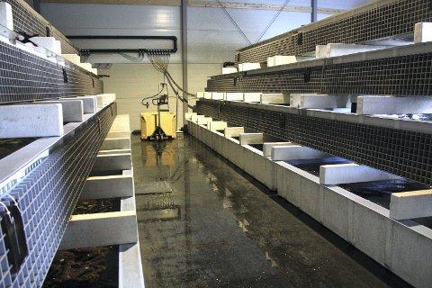 NYE GJESTER: Sjøkreps har allerede sørget for større belegg på krabbehotellet.