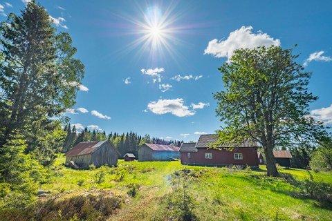 SJELDEN VARE: Lundberg Skog ved Årnes er lagt ut for salg.