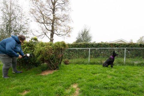 LA HUNDEN SØKE: Hundeinstruktør Anette Buind Nordby har flere forslag til hvordan du kan aktivisere hunden din selv om den ikke kan leke med andre hunder. Søking etter leker eller godbiter kan slite ut hunden mer enn du tror.