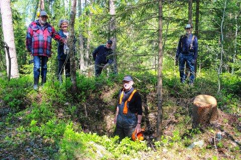 GRAVRØVERI: Vidar Larsen står nede i en grop i en av de største gravhaugene. Her har nok gravrøvere vært på ferde. Til høyre på bildet er det felt ei stort gran som ville ødelagt gravhaugen ytterligere hvis det hadde veltet.