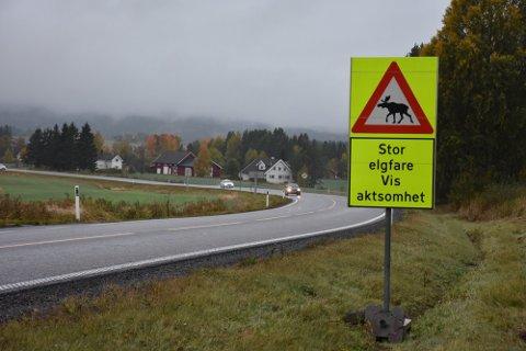 VERSTINGER: Aurskog–Høland og Lillestrøm er blant verstingkommunene i landet når det gjelder antall viltpåkjørsler som elg, hjort og rådyr.