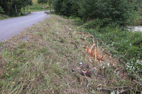 Her har kommunen brukt kantklipper for å ta ned vegetasjon langs veikanten. Det reagerer innbygger Rune Storsve på.