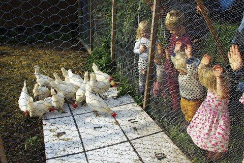 HØNEBINGO: Korn strøs på en plate med nummererte felt, ungene gjetter på et tall, og den som har gjettet feltet som den første høna skiter i, får bingo og vinner en premie.