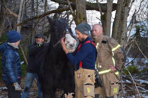 REDDET: Etter to og en halv time ble hesten reddet løs.