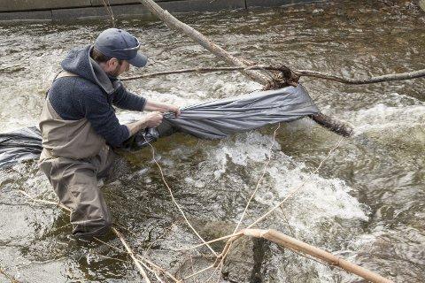 PLAST: Tommy Nielsen fjerner en diger presenning som har festet seg i elva. – Den skremmer fisken, sier han.